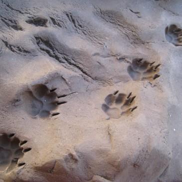 Loup y es-tu?
